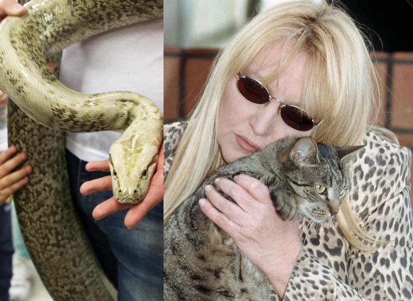 Maryla Rodowicz kocha koty. Obawia się o ich życie! /Beata Zawrzel/Agencja Forum, Krzysztof Jarosz /Reporter