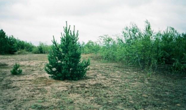 Marzec 1998 r. Biała Przemsza dzieląca pustynię na część północną i południową. /Odkrywca