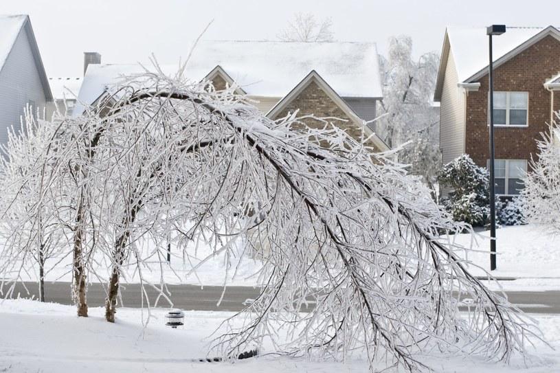 Marznące deszcze stworzyły na drzewach i sieciach elektrycznych grube pokrywy lodowe /123RF/PICSEL