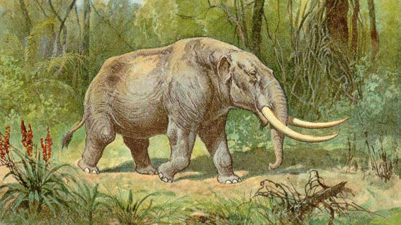 Mastodonty były większe od współczesnych słoni /Wikipedia