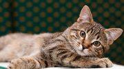 Masz kota w domu? Masz alergię!