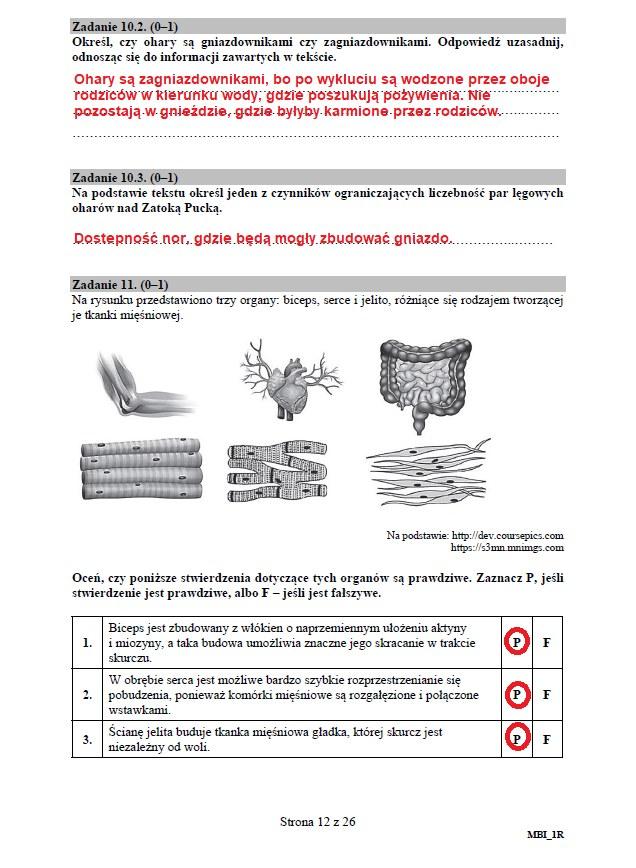 Matura 2020: Biologia - arkusz CKE i odpowiedzi, strona 12 /INTERIA.PL