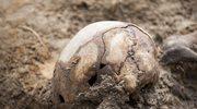 Mazowieckie: Myśliwy sprzed 8 tys. lat nie był ofiarą kanibalizmu