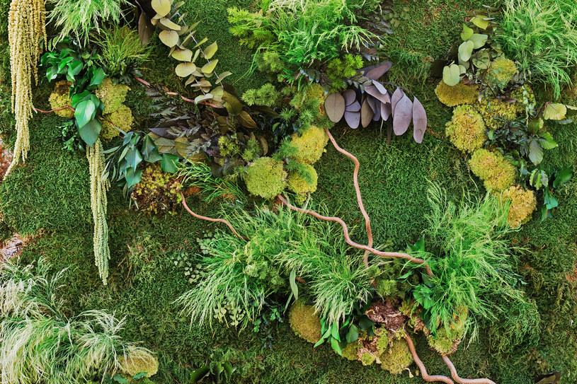 """Mech to idealne rozwiązanie dla osób, które nie mają """"ręki"""" do roślin /123RF/PICSEL"""
