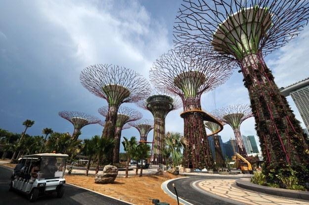 Mechaniczne drzewa pokazują jak połączyć technologię z naturą /AFP