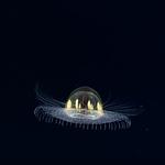 Meduza jak UFO