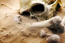 Meksyk: Makabryczne odkrycie w mieszkaniu. Prawie 4 tysiące fragmentów kości