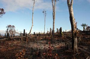 Meteorolodzy: Koniec najgorętszej dekady w historii