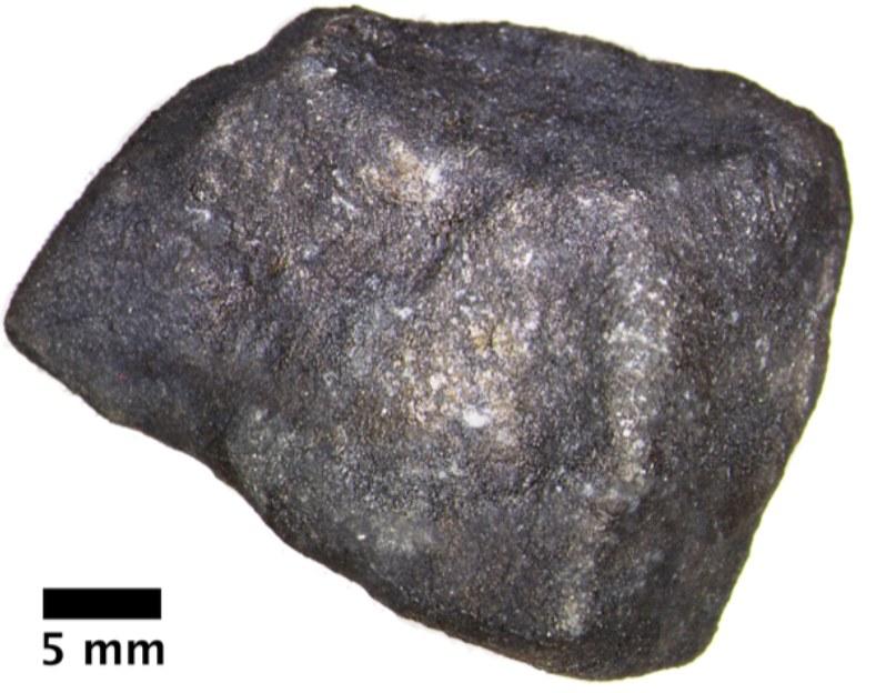 Meteoryt znaleziony na jeziorze Strawberry koło Hamburga w Michigan /(c) Field Museum /Materiały prasowe