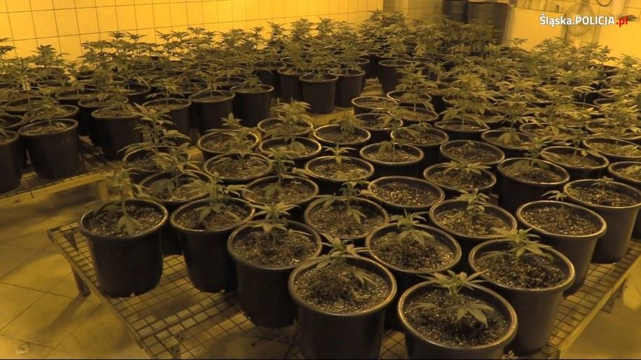 Mężczyzna miał 8 kilogramów marihuany /Policja /