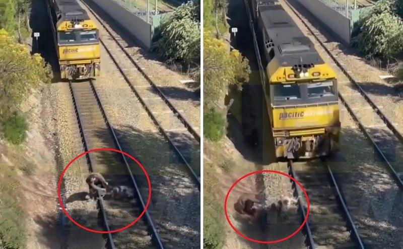 Mężczyzna uratował psa przed nadjeżdżającym pociągiem! /Facebook