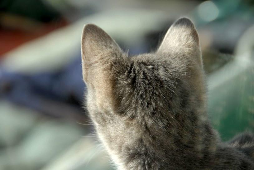 Mężczyzna usłyszał zarzut znęcania się i uśmiercenia kota /123RF/PICSEL