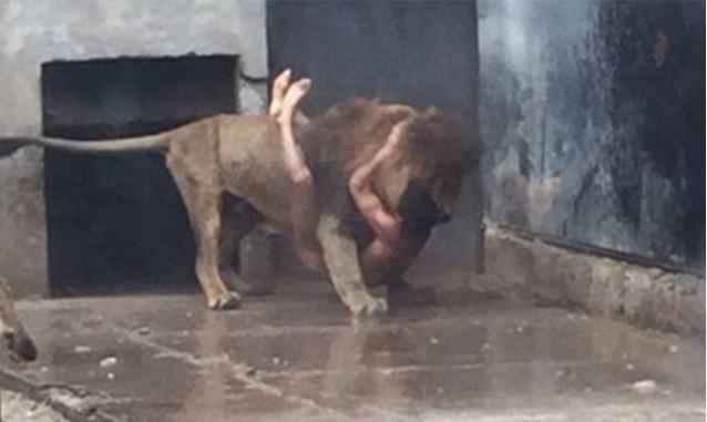 Mężczyzna wskoczył na wybieg dla lwów / NOTICIAS Chelmevision /Twitter