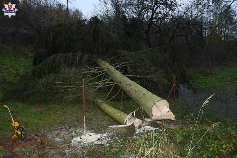 Mężczyzna został przygnieciony przez upadające drzewa /Policja Lubelska /