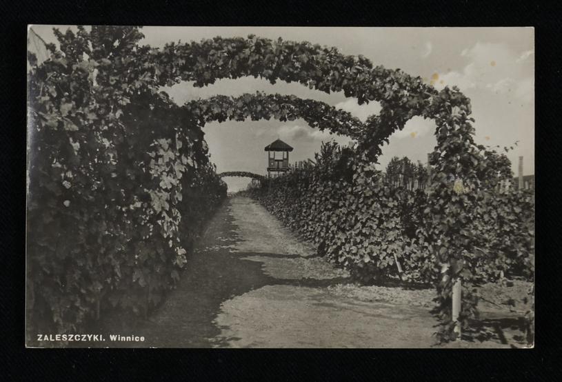 Miasteczko słynęło z winnic i sadów. Zaleszczyki, rok 1935 /Biblioteka Narodowa