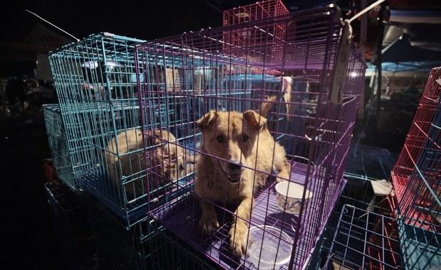 """Miasto Shenzhen zakazuje jedzenia psów i kotów. """"Wymogi współczesnej cywilizacji"""""""