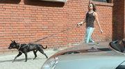 Michał Szpak spaceruje z psem. Historia zwierzaka jest niesamowita!