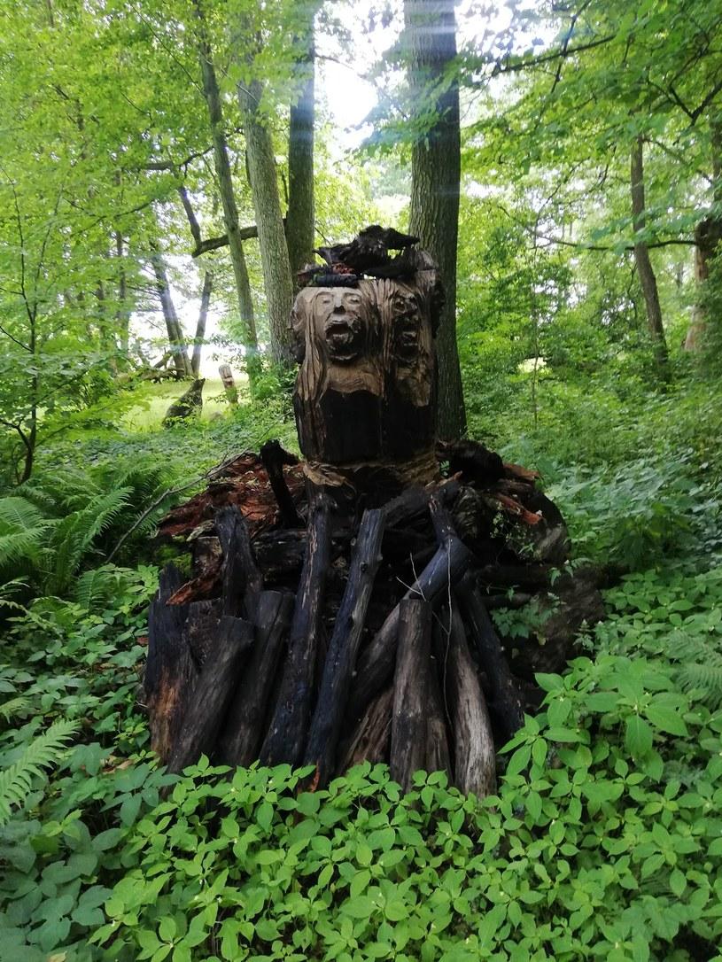 Między drzewami ukryte są rzeźby prehistorycznych bogiń i wiedźm /Gabriela Kurcz /INTERIA.PL