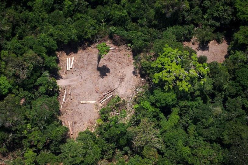 Miejsce nielegalnego wyrębu w Amazonii /AFP