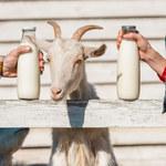 Mieszanki z kozim mlekiem lepsze dla malucha