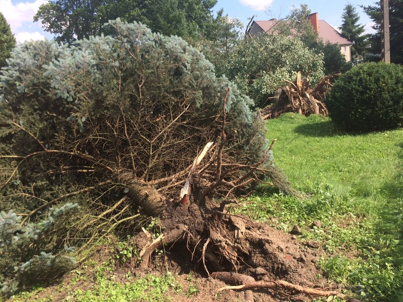 Mieszkańcy Bobrówka w Lubuskiem liczą straty po trąbie powietrznej /Adam Górczewski /RMF FM