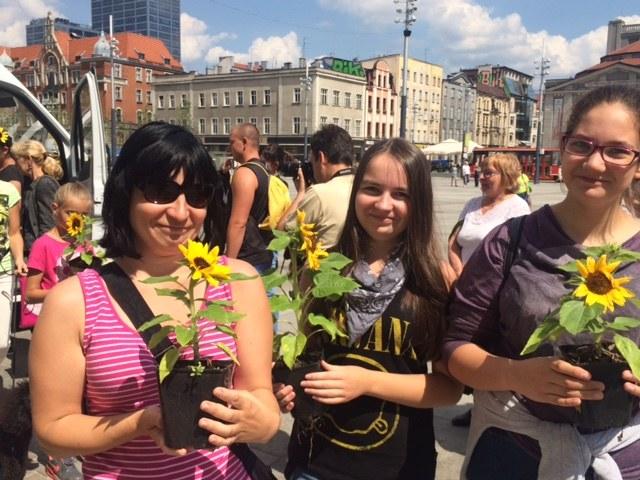 Mieszkańcy Katowic z sadzonkami słoneczników /Anna Kropaczek /RMF FM