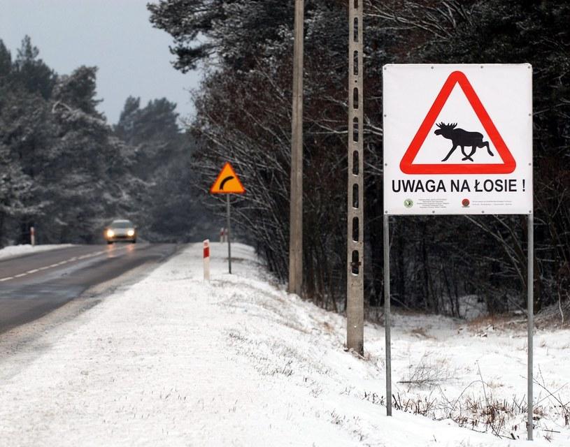 Mieszkańcy Krakowa i okolic muszą uważać na grasującego łosia. Zdj. ilustracyjne /Michał Kość /East News