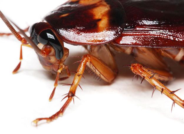 Mieszkańcy, którzy kupują lepy, spray'e i inne środki, które zabijają karaluchy  / Zdjęcie ilustracyjne /123RF/PICSEL