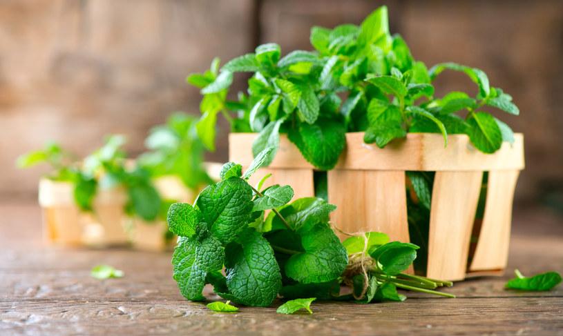 Mięta to najpopularniejsze zioło stosowane w problemach trawiennych. /123RF/PICSEL