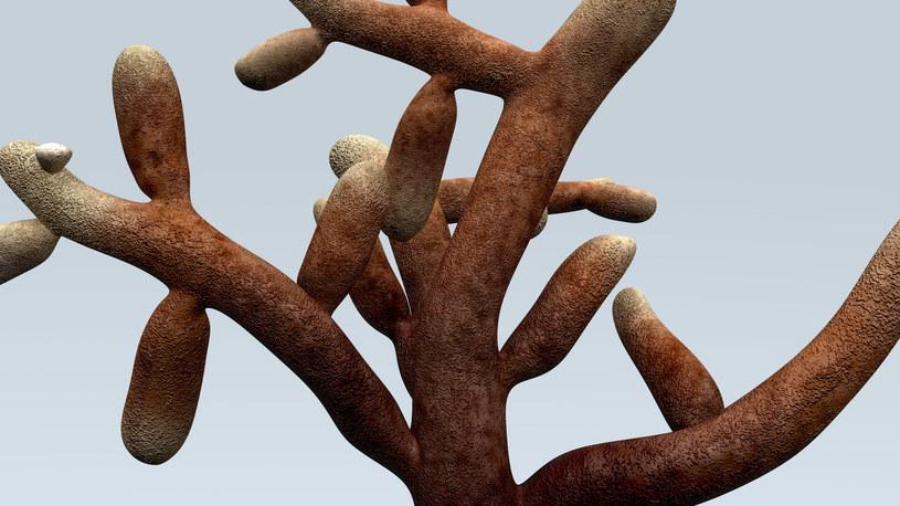 Mikoryza to symbioza grzybów i korzeni roślin /123RF/PICSEL