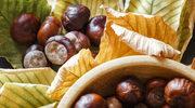 Mikstury z kasztanów przeciw żylakom