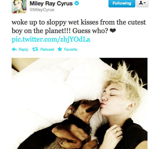 Miley uwielbia publikować fotki ze swoimi ulubieńcami /Splashnews