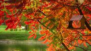Mimozami jesień się zaczyna