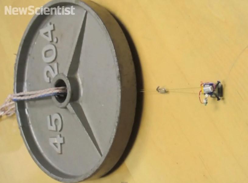 Miniaturowy robot - siłacz. /YouTube