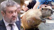 """Minister rolnictwa Ardanowski chce uznać bobry za jadalne! """"Ogon to afrodyzjak"""""""
