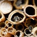 Minister rolnictwa konsekwentnie szkodzi pszczołom