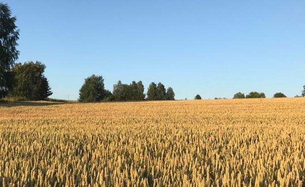 Minister rolnictwa zapowiada plan dla wsi. Rolnicy odpowiadają: Puste słowa