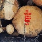 Minister środowiska uchyla decyzję ws. usuwania drzew w Puszczy Białowieskiej