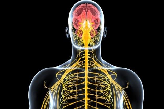 Minóg morski pomoże znaleźć sposób na regenerację rdzenia kręgowego u ludzi? /123RF/PICSEL