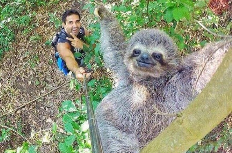 Mistrzowskie selfie! /NicolasHuskar /imgur.com