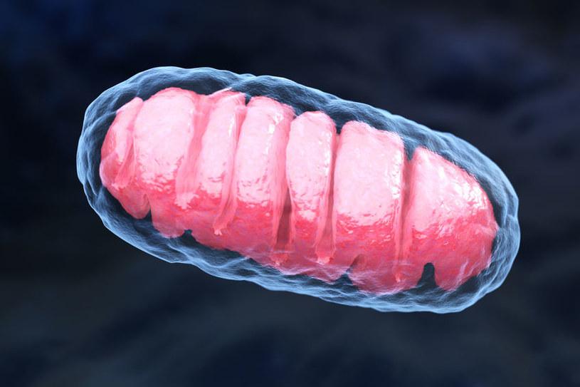 Mitochondrium /©123RF/PICSEL