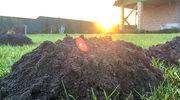 Mity o kreciej robocie: Dlaczego lepiej nie deptać kopców na trawniku?