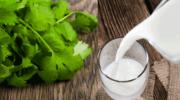 Mleko i kolendra