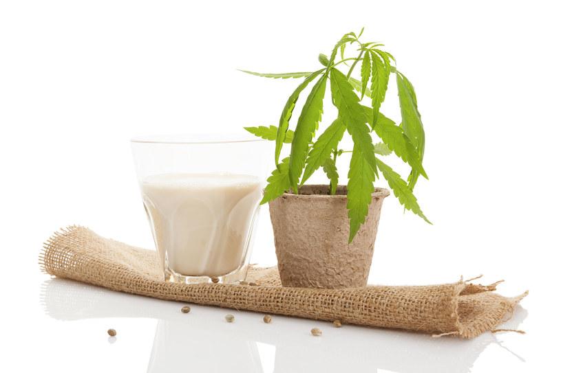 Mleko konopne /123RF/PICSEL