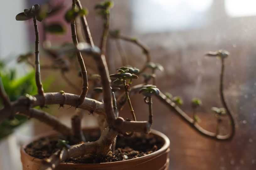 Młode liście /©123RF/PICSEL