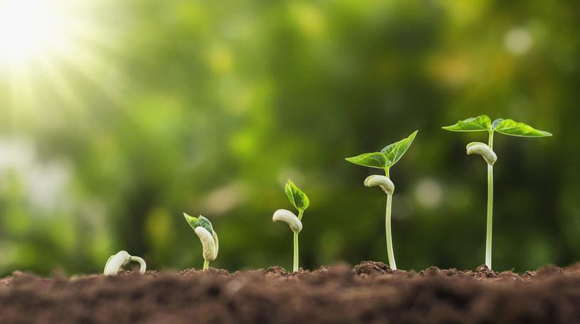 Młode listki są zdrowsze niż dorosłe warzywa - przekonują dietetycy /123RF/PICSEL