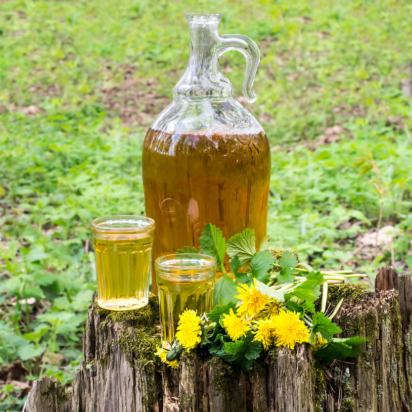 """Mniszek lekarski to doskonały surowiec na domowe """"winko z mniszka"""", które ma właściwości żółciopędne i moczopędne /123RF/PICSEL"""
