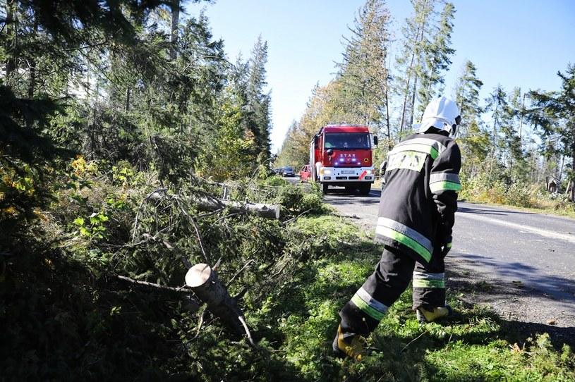 Mocno wieje także w powiecie tatrzańskim, na zdjęciu: Strażacy usuwają powalone drzewa na drodze prowadzącej do Łysej Polany i Morskiego Oka / Grzegorz Momot    /PAP