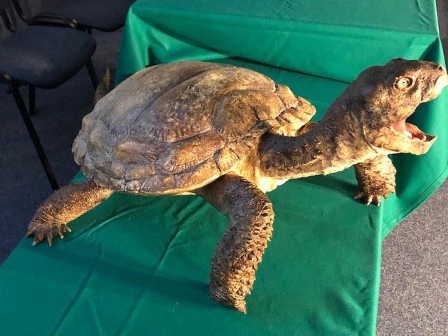 Model jednego z najstarszych żółwi świata /Krzysztof Berenda /RMF FM