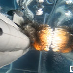 Model okrętu podwodnego w spowolnionej eksplozji